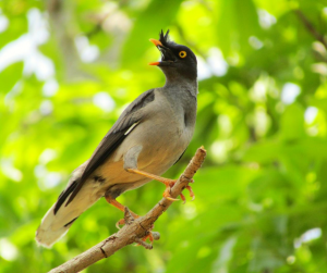 Bird photography is a wonderful photography niche.