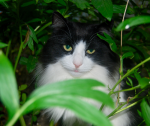 Consider the setting when doing pet photography.