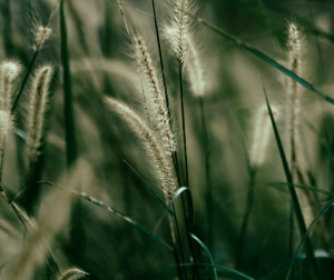 You need to consider texture and detail in grass photography.