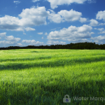 A watermark is a digital image that overlays the original photo.